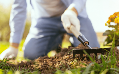 How to Start a Garden and Why You Should
